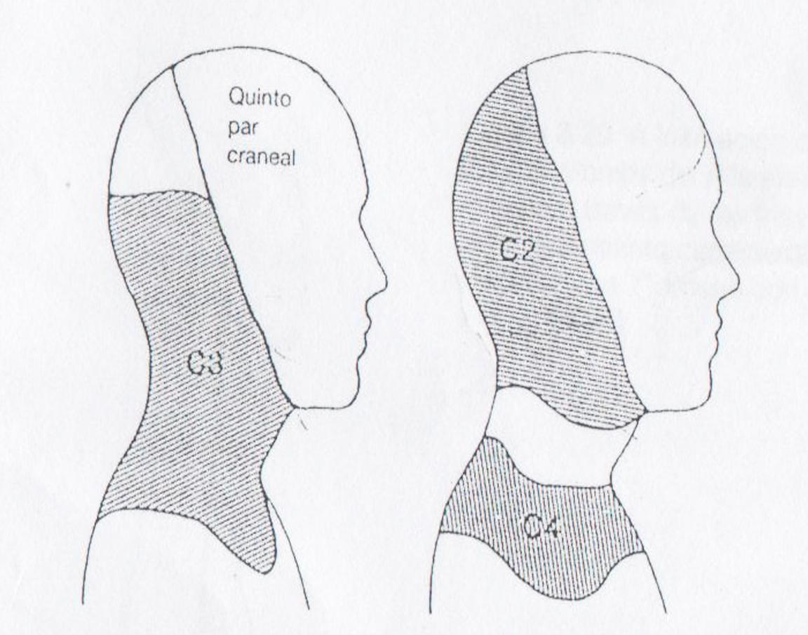 Metámeras | FisioterapiActiva